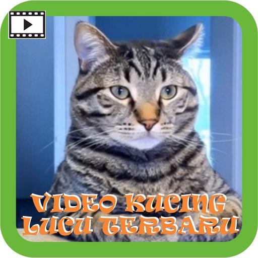 Video Kucing Lucu Terbaru 1 0 Apk Download Com Andromo Dev686373