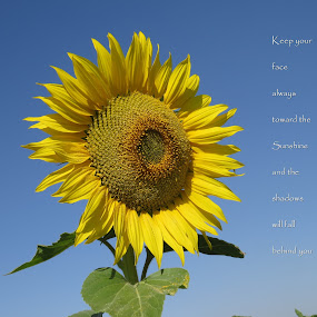 Be a Sunflower by Akbar Ali Asif - Typography Captioned Photos ( nature, courage, sunflower, flowers, hope )
