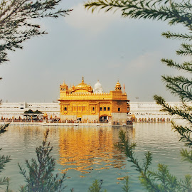 Golden Temple  by Ricky Singh - Buildings & Architecture Places of Worship