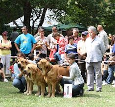 Photo: Best breeding group - Tornado Erben  in Barrios de Luna , 8.9.2012, judge Luis Esquiro photo Sally Nielsen