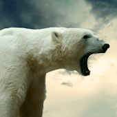 polar bear wallpaper live