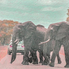 Painting on a Street Wall by Elna Geringer - Digital Art Animals