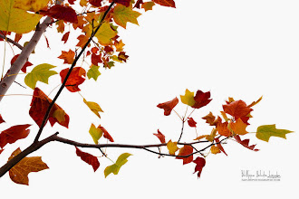 Photo: Autumn Phases