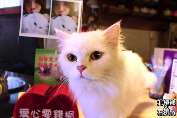 星空.cat 蔬食料理坊