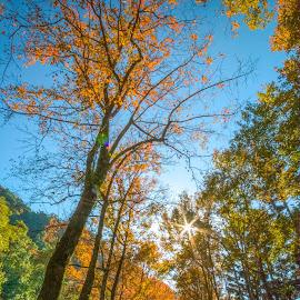 置身於火紅的楓樹葉下,彷彿進入了風景畫般的意境 by Gary Lu - City,  Street & Park  City Parks ( gary lu, city park )
