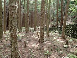 石垣を避けて林道へ