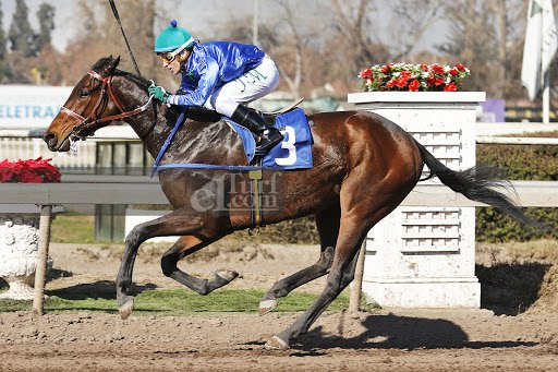 Natalino (Seeking The Dia) se adjudica Handicap (1600m-Arena-CHS). - Staff ElTurf.com