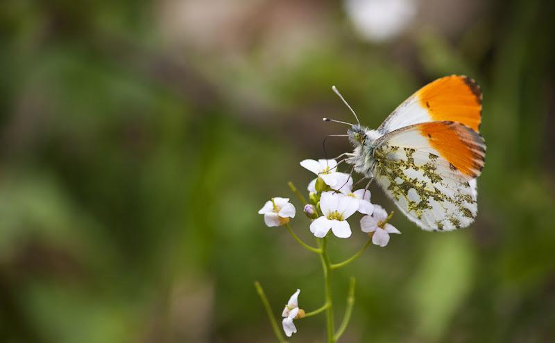 Butterfly di Simona Rizzi
