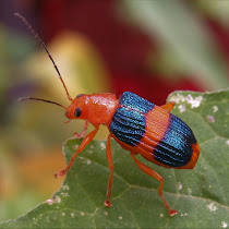 Arthropoda Brasil