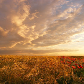summer colors by Victor Pavel - Landscapes Prairies, Meadows & Fields ( ..... )