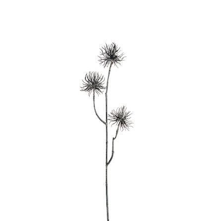Eternell grå tistel 55 cm