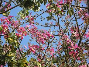 Photo: Прекрасное розовое дерево