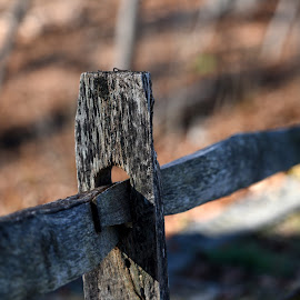 Fence Along the Trail  by Lorraine D.  Heaney - Artistic Objects Other Objects (  )