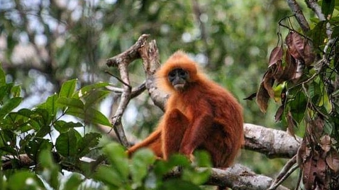 Orangutan Tour Houseboat Borneo Eco Tour Pangkalan Bun Tour Operator