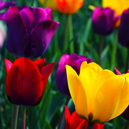 Pretty flower wallpapers apps on google play mightylinksfo