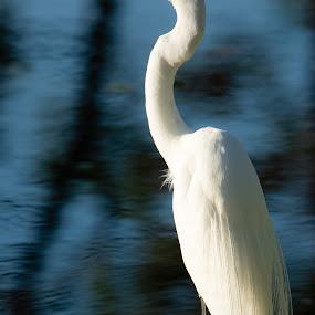 by Wilson Silverthorne - Animals Birds ( florida, birds )