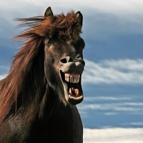 Freestyle by Bragi Ingibergsson - Animals Horses ( brin, horse, bragi  j. ingibergsson, animal )