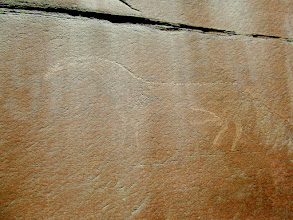 Photo: Large, unfinished horse petroglyph
