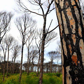 After the fire by Gil Reis - Nature Up Close Trees & Bushes ( forest, fires, nature, bio, trees, life )
