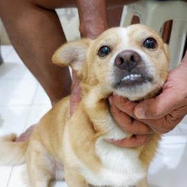 Cutie Choco by Friska Frilisia - Animals - Dogs Playing ( doggo, choco, cutie, puppy, doggie, dogs, playing, dog, puppies, cute )