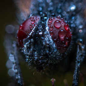 by Jay Reich - Nature Up Close Natural Waterdrops ( minimally, red, fly, ggygy6, bug, jayricart, rain,  )