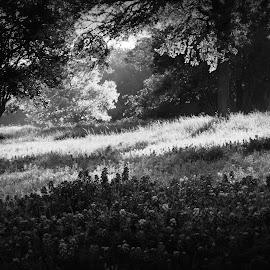 MORNING LIGHT by Brenda Shoemake - Black & White Landscapes (  )
