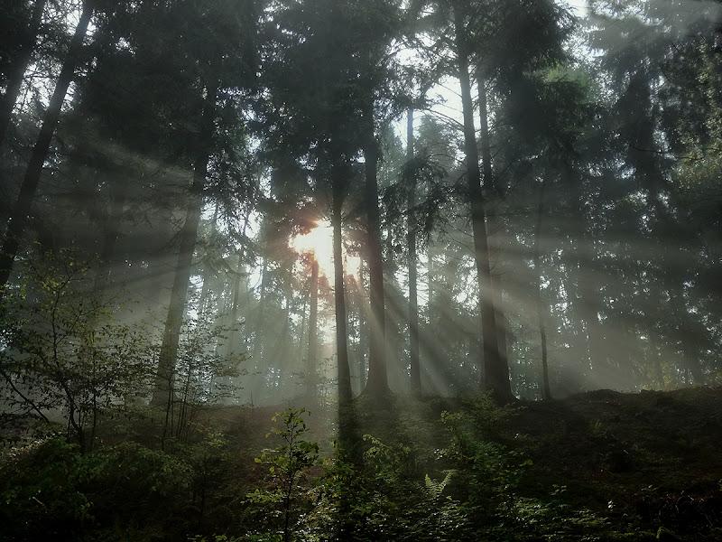 I primi raggi filtrano nel bosco di brunosma