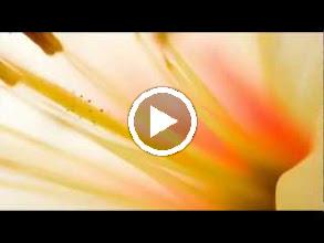 Video: A. Vivaldi  RV 121   Paris Concerto n. 10 for strings   b.c. in D major   R. Alessandrini -