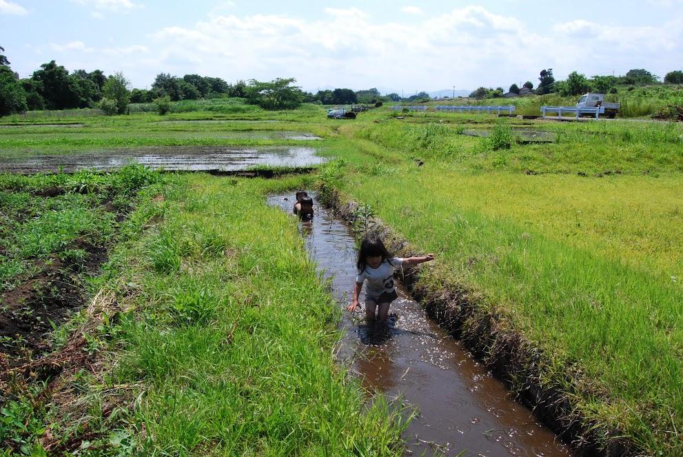 田んぼの水路で遊ぶこども達。