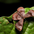 Fatal Metalmark Butterfly