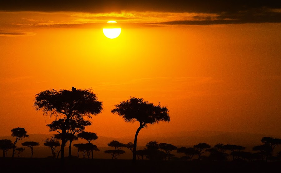 Masai Mara Sunset by Elsen Karstad - Landscapes Travel ( elsen karstad, masai mara, sunset, safari, kenya, travel, africa )