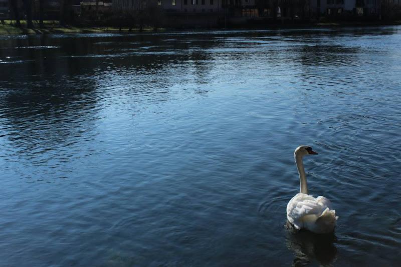 Lago dei cigni di Marika Posio PH
