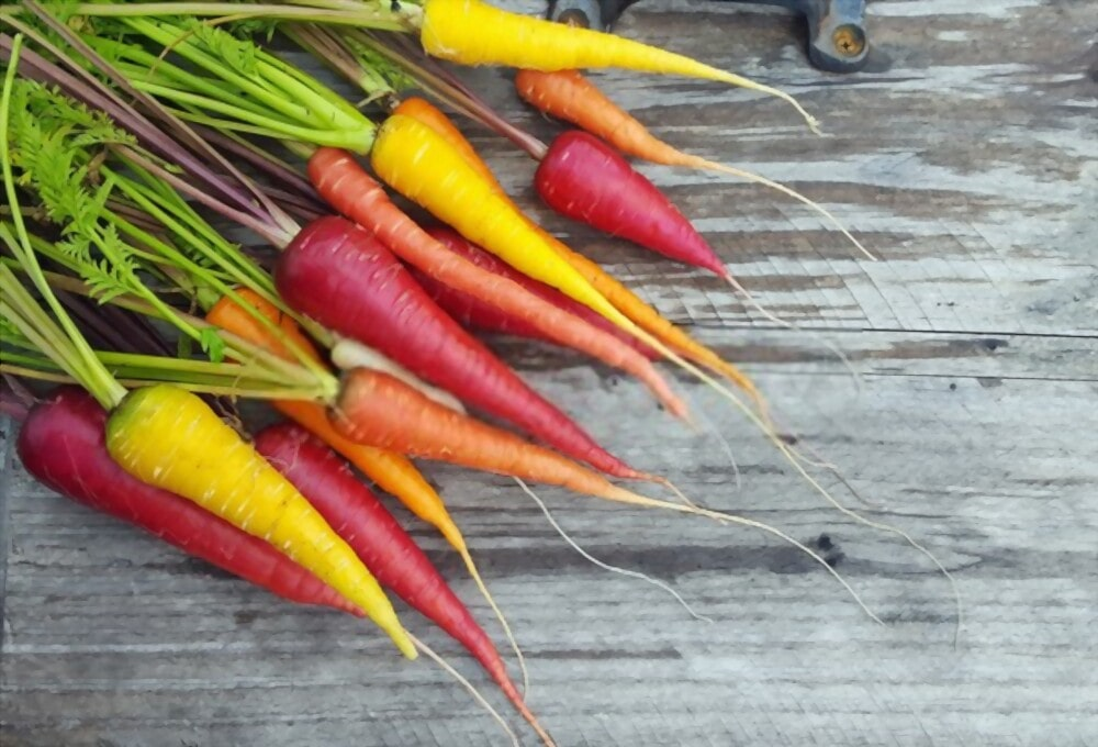 Types of carrots and their colors