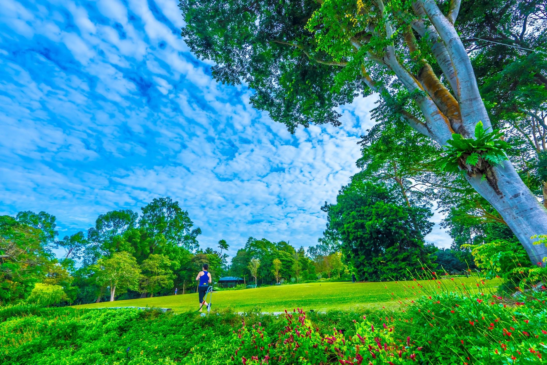 シンガポール植物園(ボタニック・ガーデン)1