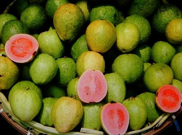 GUAVAS....Refrigerate when soft Clean, stem, slice  puree in a blender, squeeze through several...