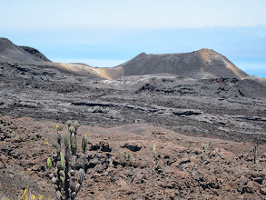 Photo: Fruiting cactus and recent lava flow