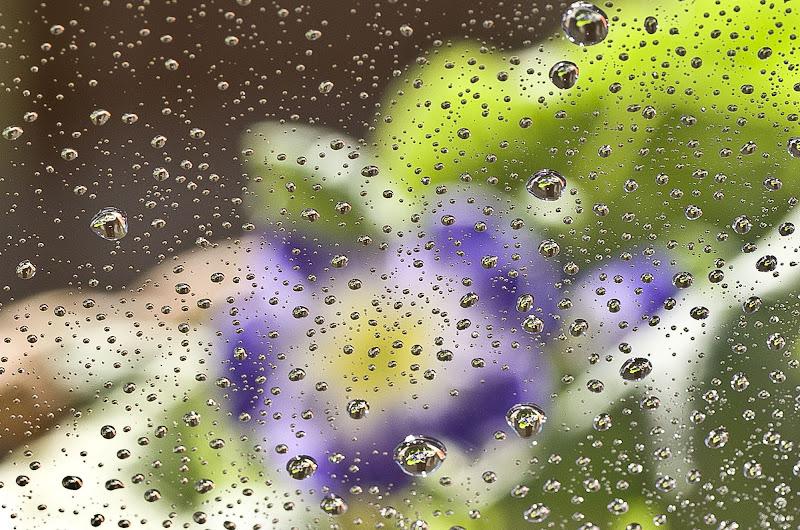 Oltre la pioggia di Tiziana Detoni