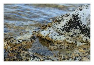 Photo: Eastern Sierras-20120716-585