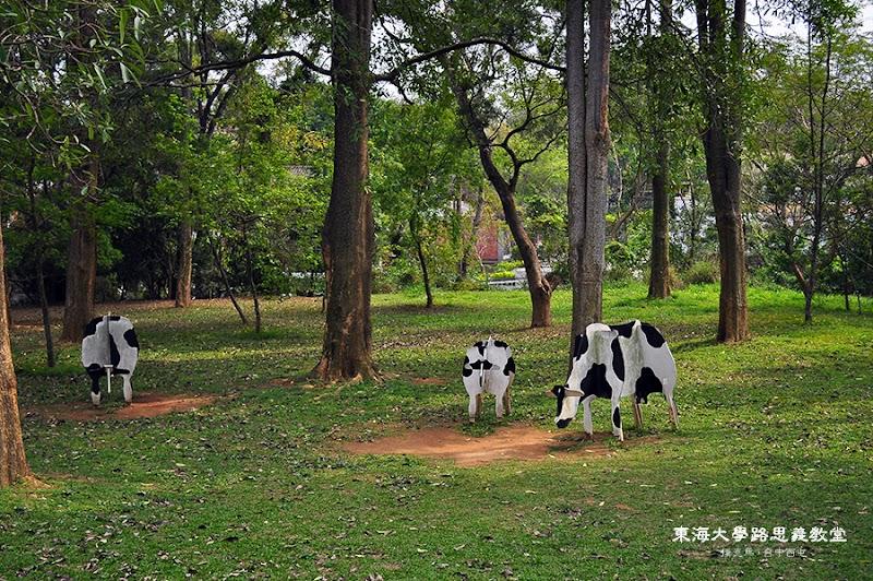 東海大學正在吃草的乳牛(模型)