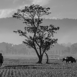 by Afandi David - Black & White Portraits & People