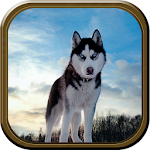 Wild Wolf Simulator Icon