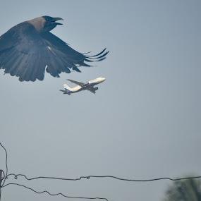 Crow-Plane by Suman Basak - Transportation Airplanes ( bird, sky, airplane, travel, transportation )