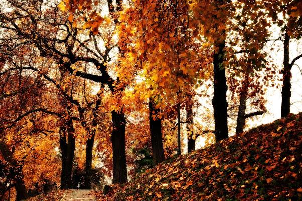 autunno dorato di domenicolobinaphoto