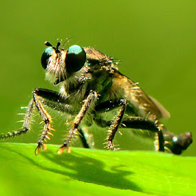 by Nitin Puranik - Animals Insects & Spiders