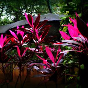 by Vijayendra Venkatesh - Nature Up Close Other plants