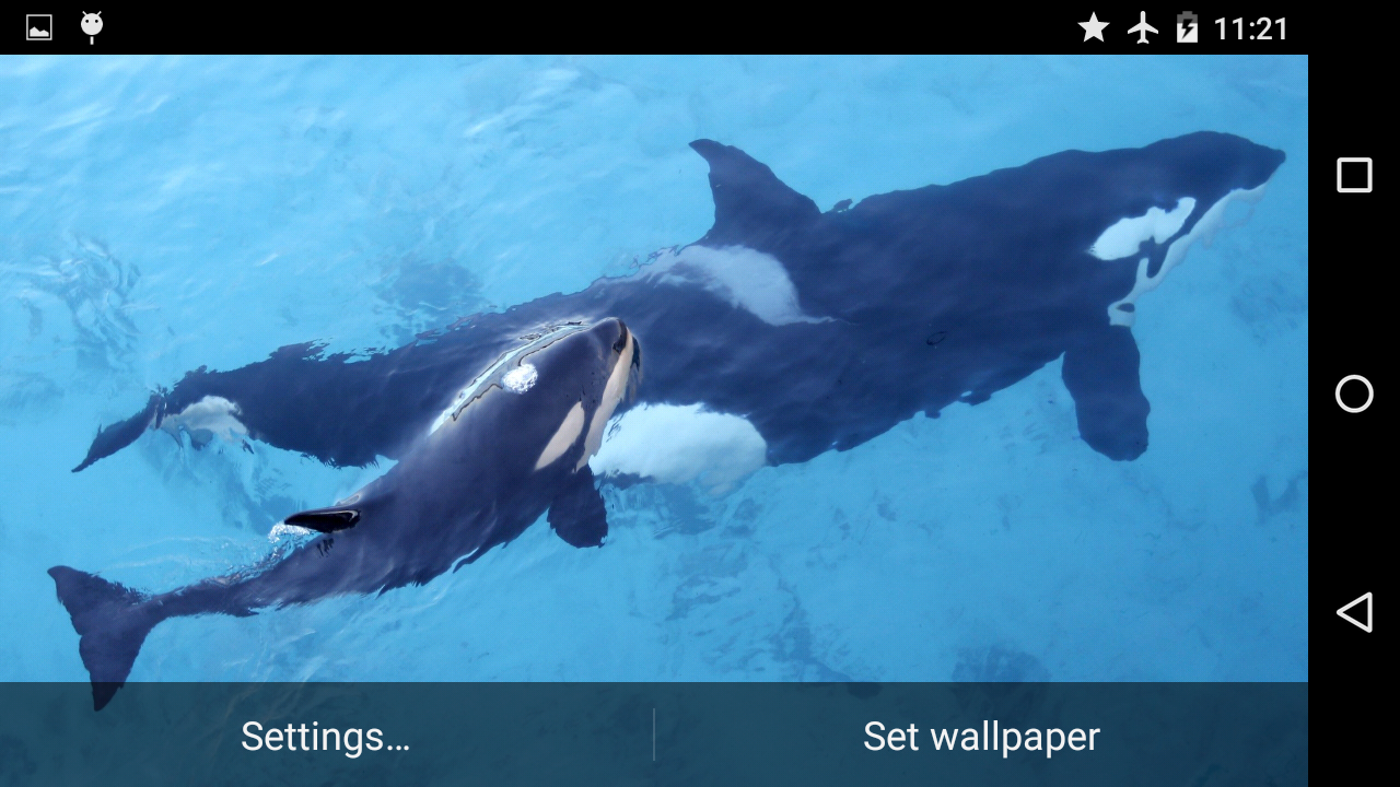 online casino app online orca