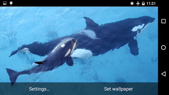Orca Killer Whale for PC / Windows 7, 8, 10 / MAC Free