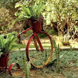 Garden Bicycle by Luciana Popa - Artistic Objects Antiques ( #plant, #outdoorphotography, #outdoors, #ornament, #grass, #inthepark, #plants, #green, @antique, #park, #bicycle, #pic, #image, #photo, #ornaments, #bicyclepic, #grassphoto, #photography )
