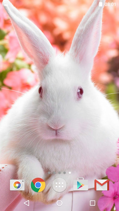 cute animals live wallpaper   android apps on google play