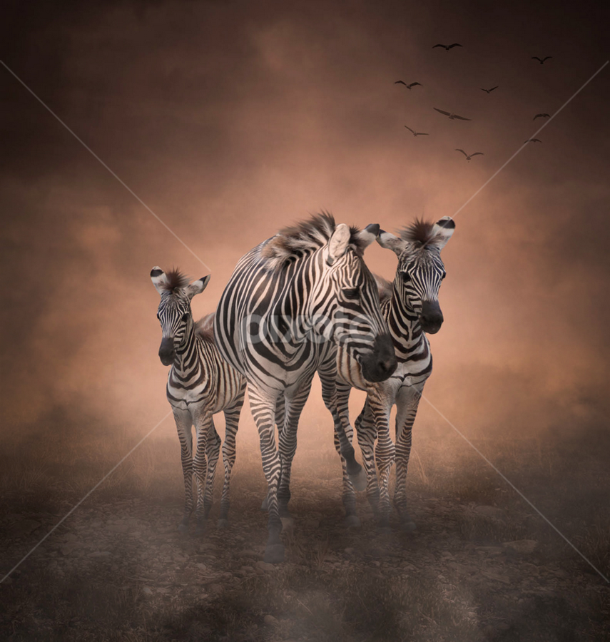 Traveling Together by Alfa Oldicius - Digital Art Things